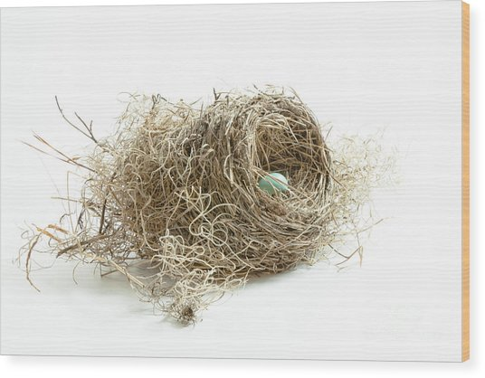 Bird Nest 1 Wood Print