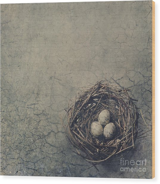 Bird Nest Wood Print