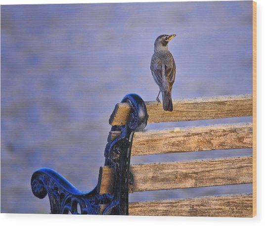 Bird On A Bench Wood Print