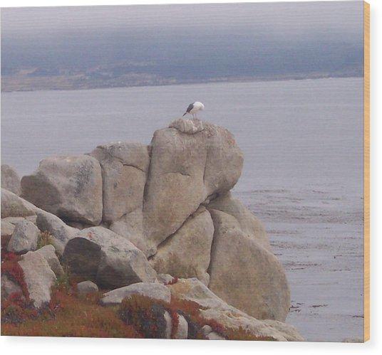 Bird On A Rock Wood Print by Pharris Art