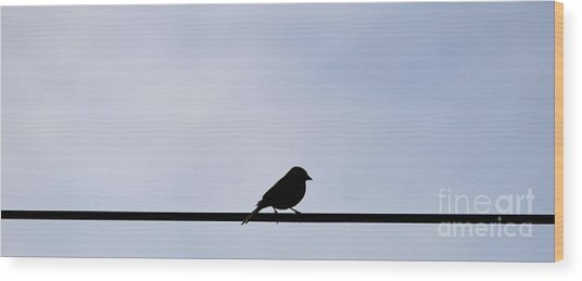 Bird On A Wire  Wood Print