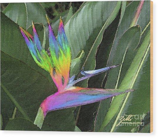 Bird Ow  Paradise Wood Print