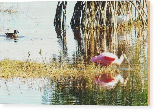 Bird Watching Wood Print by Van Ness