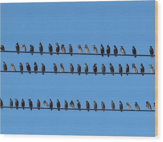 Bird's Affair Wood Print