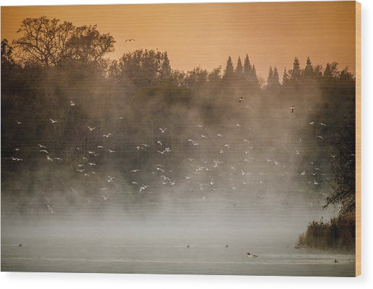 Birds And The Fog  Wood Print