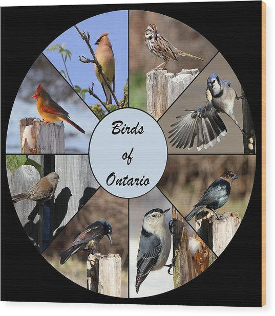 Birds Of Ontario Wood Print