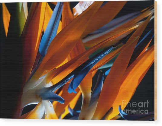 Birds Of Paradise Wood Print by Todd Edson