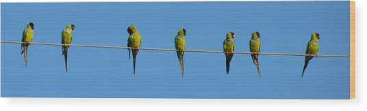 Birds On A Wire Wood Print by Julie Cameron