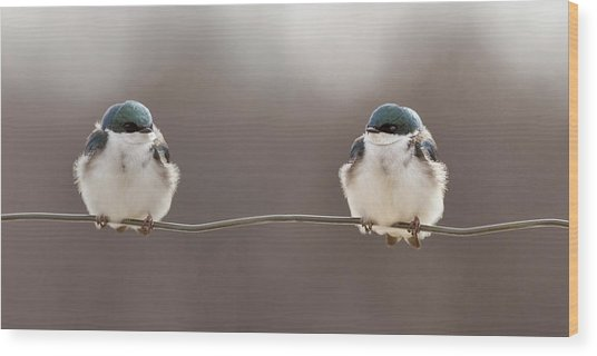 Birds On A Wire Wood Print by Lucie Gagnon