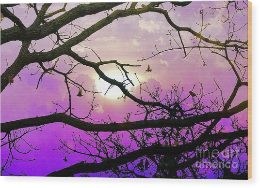 Birds Roosting For Night Wood Print