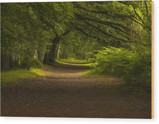 Birnam Woods Landscape Wall Art Wood Print