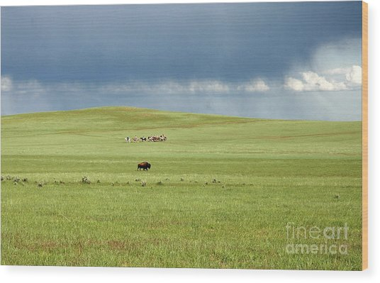 1009a Bison And Riders Wood Print