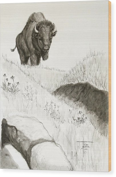 Bison Approach Wood Print