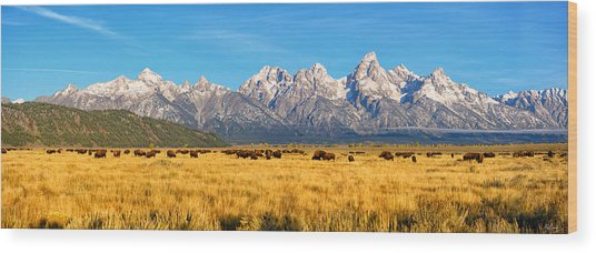 Bison Beneath The Tetons Limited Edition Panorama Wood Print