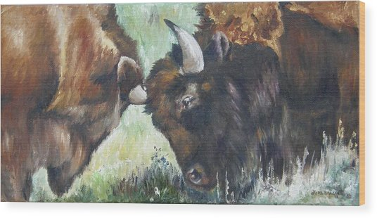 Bison Brawl Wood Print
