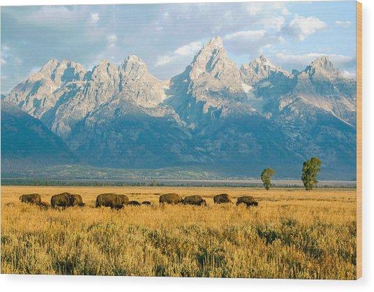 Bison Herd Wood Print