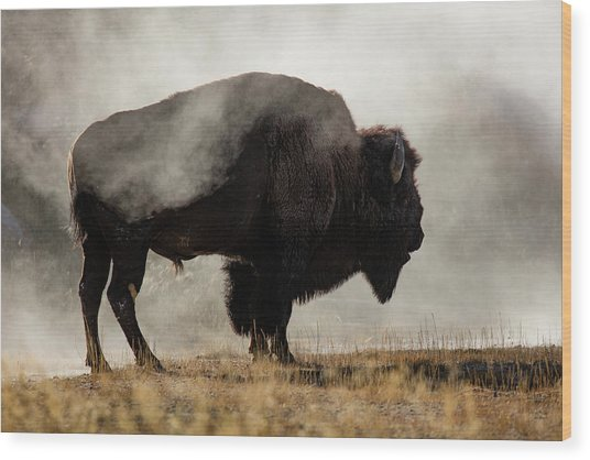 Bison In Mist, Upper Geyser Basin Wood Print