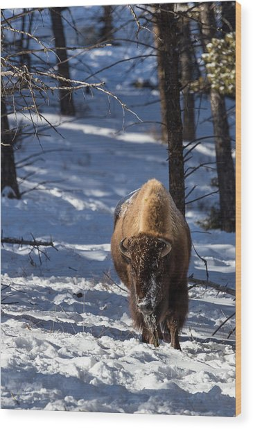 Bison In Winter Wood Print