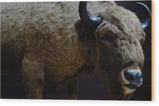 Bison Stuffed Wood Print