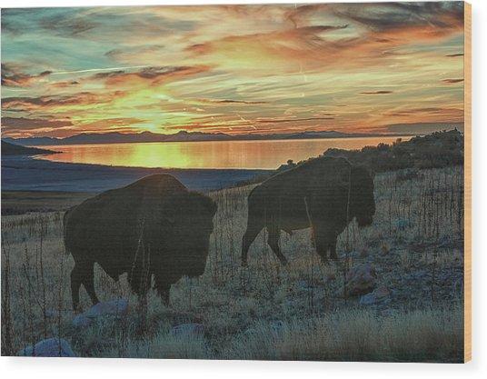 Bison Sunset Wood Print