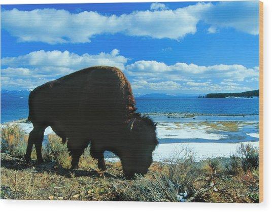 Bison Yellowstone Wood Print