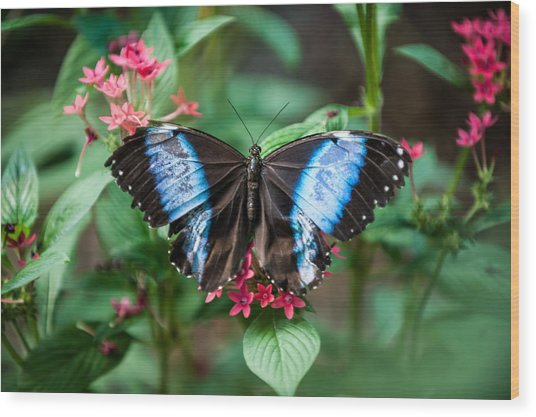 Black And Blue Wings Wood Print