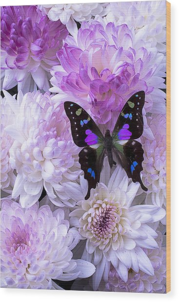 Black And Purple Butterfly On Mums Wood Print
