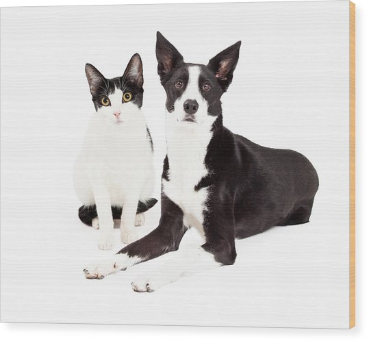 Black And White Cat And Dog Wood Print