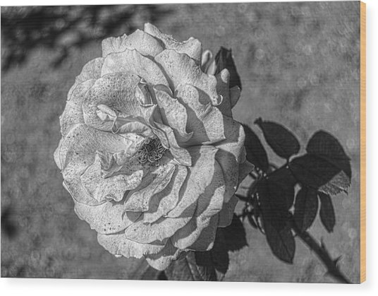 Black And White Flower #2 Wood Print