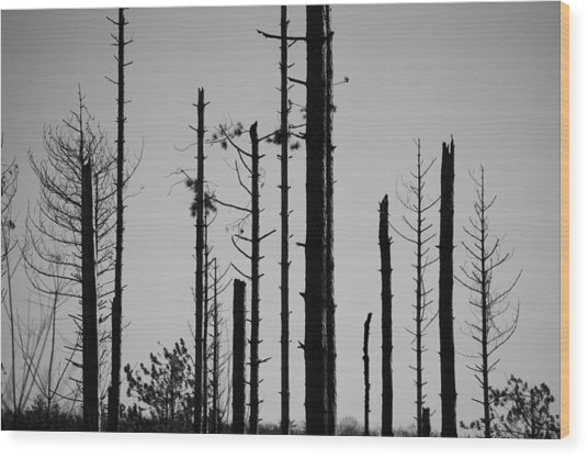 Black And White Forest 1 Wood Print