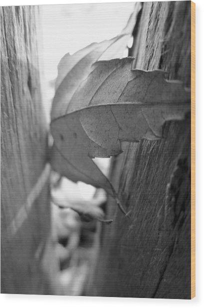 Black And White Leaf At Fort Watauga Wood Print