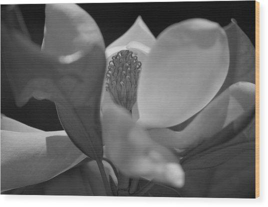 Black And White Magnolia Wood Print