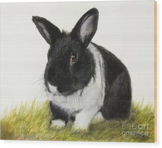 Black And White Pet Rabbit Wood Print