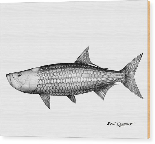 Black And White Tarpon Wood Print