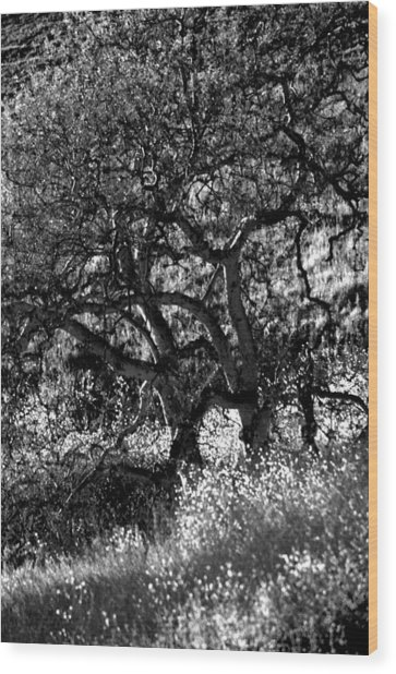 Black And White Trees Wood Print
