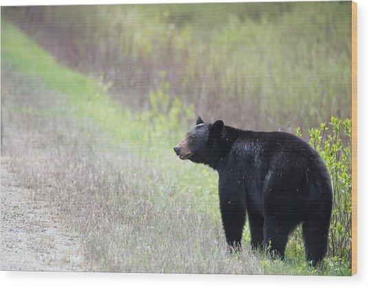 Black Bear 3 Wood Print by Andy Fung