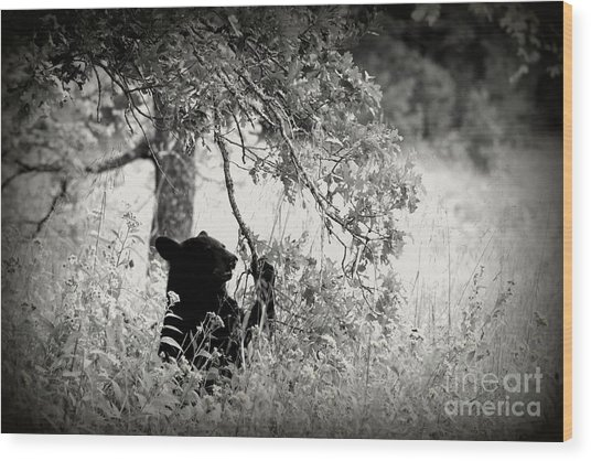Black Bear Sitting Wood Print