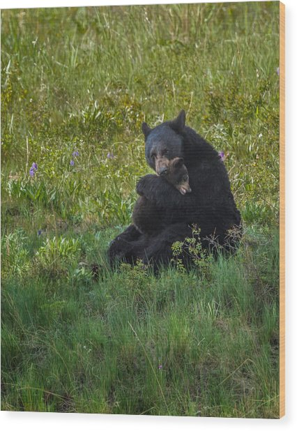 Black Bear Sow Hugging Cub Wood Print