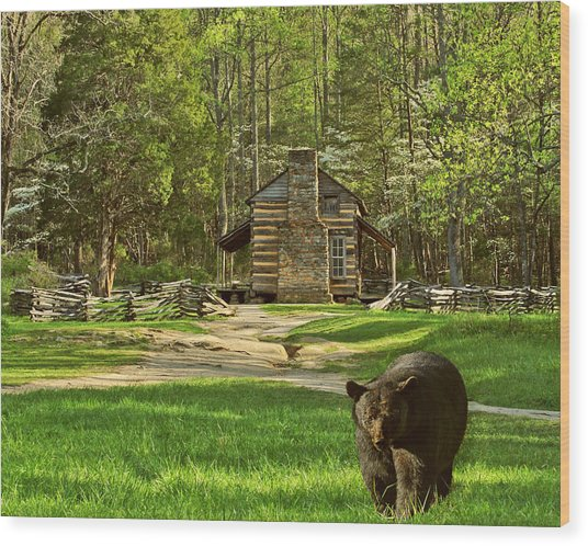 Black Bear Wandering II Wood Print