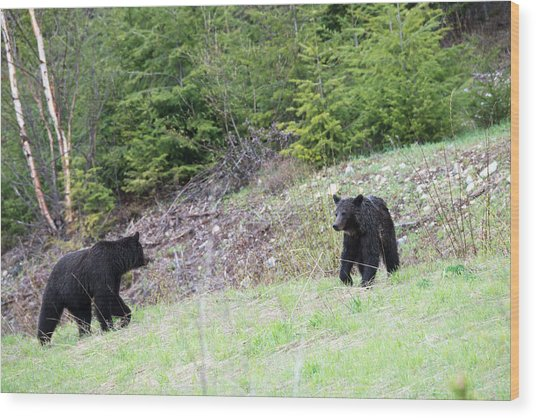 Black Bears In Motion Wood Print by Andy Fung