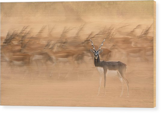 Black Bucks Wood Print by Sayyed Nayyer Reza