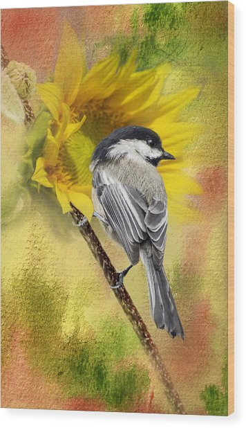 Black Capped Chickadee Checking Out The Sunflowers Wood Print