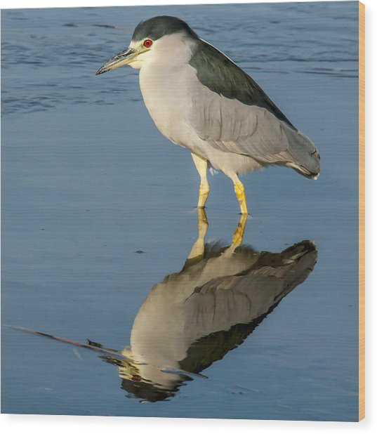 Black Capped Night Heron 6531 Wood Print