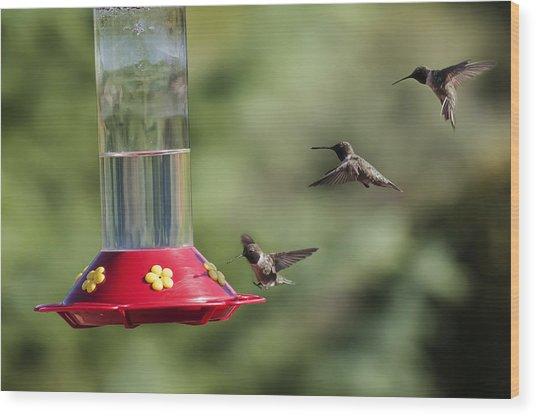 Black-chinned Hummingbird Action Panorama Wood Print