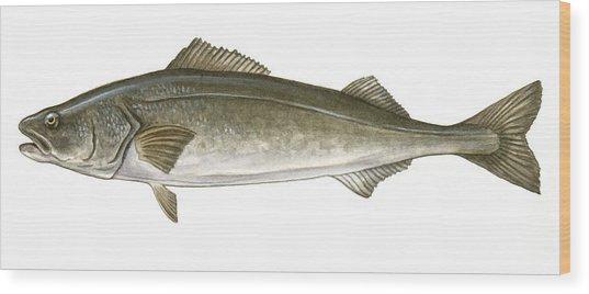 Black Cod Wood Print by Logan Parsons