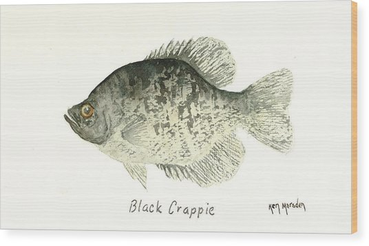 Black Crappie Wood Print