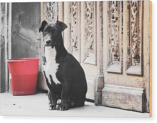 Black Dog Guarding A Vintage Wooden Door Wood Print