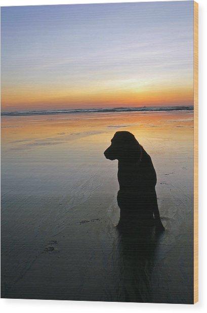 Black Dog Sundown Wood Print