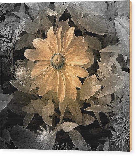 Black Eye Susan Wood Print