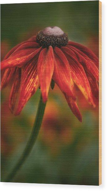 Black-eyed Susan Wood Print